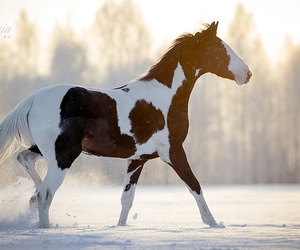 horse and snow image