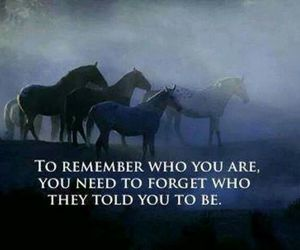 horse, life, and quote image