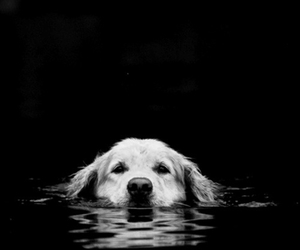dog, water, and black and white image
