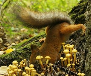 animal, forrest, and mushroom image