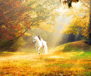 autumn, horse, and forest image