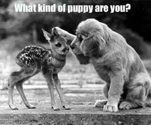 animals, bambi, and puppy image