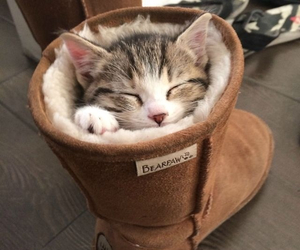 kitty, cute, and ugg image