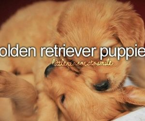 cute, puppy, and golden retriever image