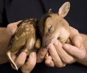 animal, baby, and deer image
