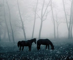 horse, forest, and fog image