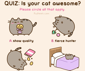 cat, pusheen, and awesome image