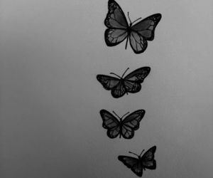 butterfly, black and white, and drawing image
