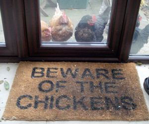 beware, photography, and chickens image