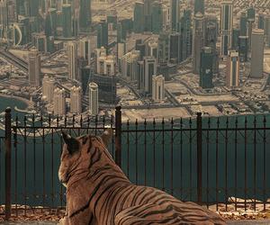 tiger, city, and animal image
