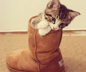 kitty and uggs image