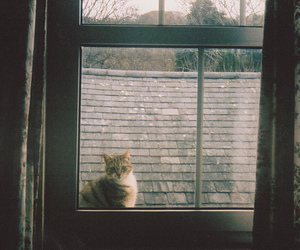 cat, window, and photography image