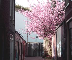 tree, beautiful, and flowers image