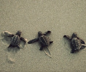 adorable, beach, and sand image