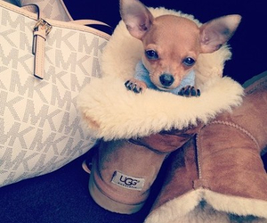 dog, cute, and ugg image