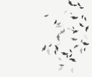 beautiful, black, and feathers image
