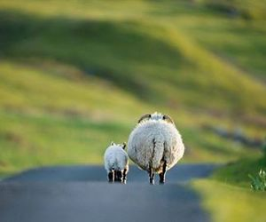 sheep, animal, and nature image