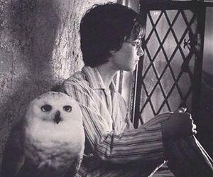 harry potter, hedwig, and hogwarts express image