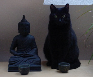cat, black, and Buddha image