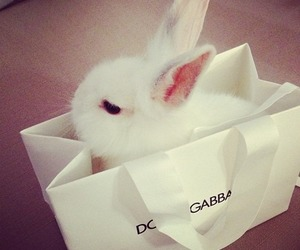 cute, rabbit, and white image