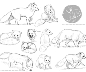 artic, drawn, and fox image