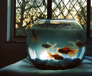 fish, vintage, and water image