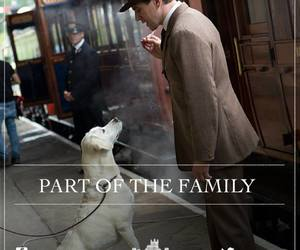 dog, lab, and labrador image