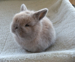 adorable, lovely, and fluffy image