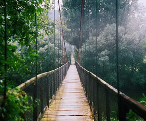 adventure, forrest, and nature image