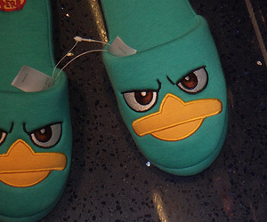 perry and slippers image