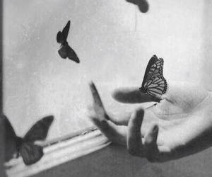 b&w, vintage, and butterflies image