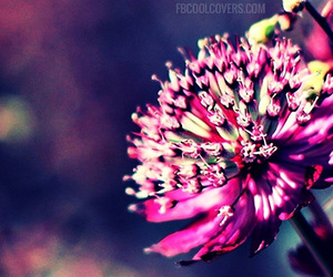 flowers, purple flowers, and facebook covers image