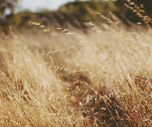nature and wheat image