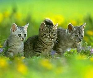 animal, cat, and grass image