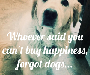 dog, dogs, and inspire image