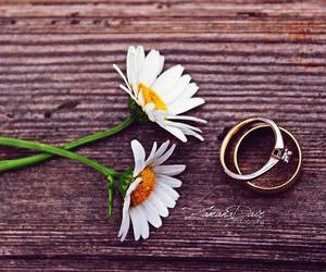 daisy, photography, and rings image