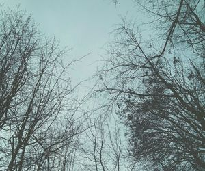 sky, trees, and winter image