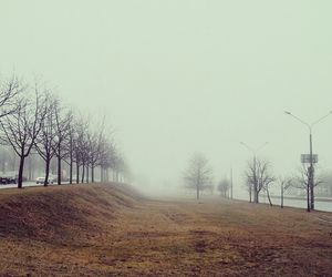 fog, loneliness, and nature image