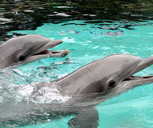 adorable, the one my first, and dophin image
