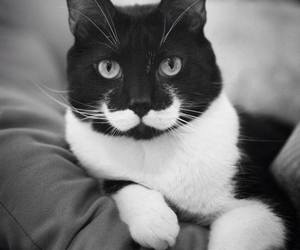 black and white, cat, and moustage image
