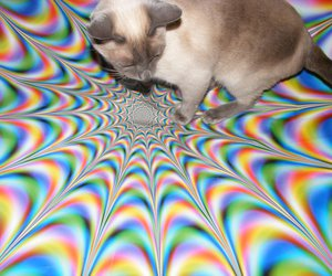 cat, siamese, and psychedelic image