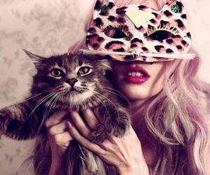cat, stars, and fashion image