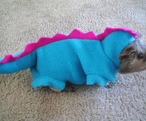 cute, guinea pig, and dinosaur image