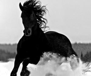 animal, black, and grey image