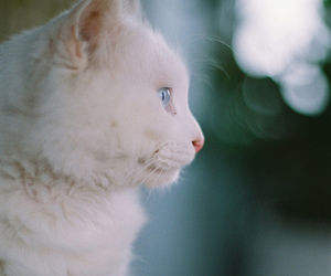 cat, white, and photography image