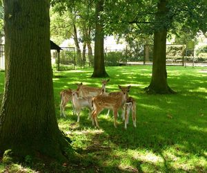 animals, bambi, and funny image
