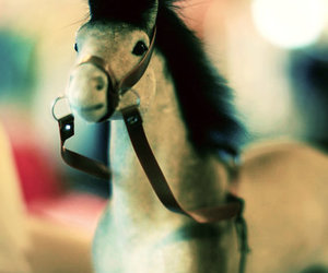 horse, photography, and toy image