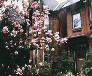 flowers, vintage, and house image