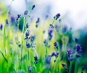 herbs, lavender, and wildflowers image