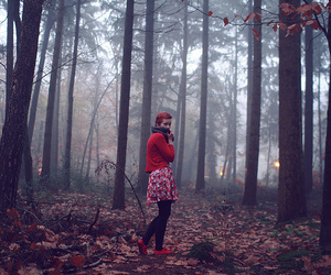 blog, fog, and forest image